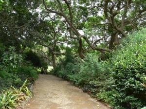 Kerkin Garden 1
